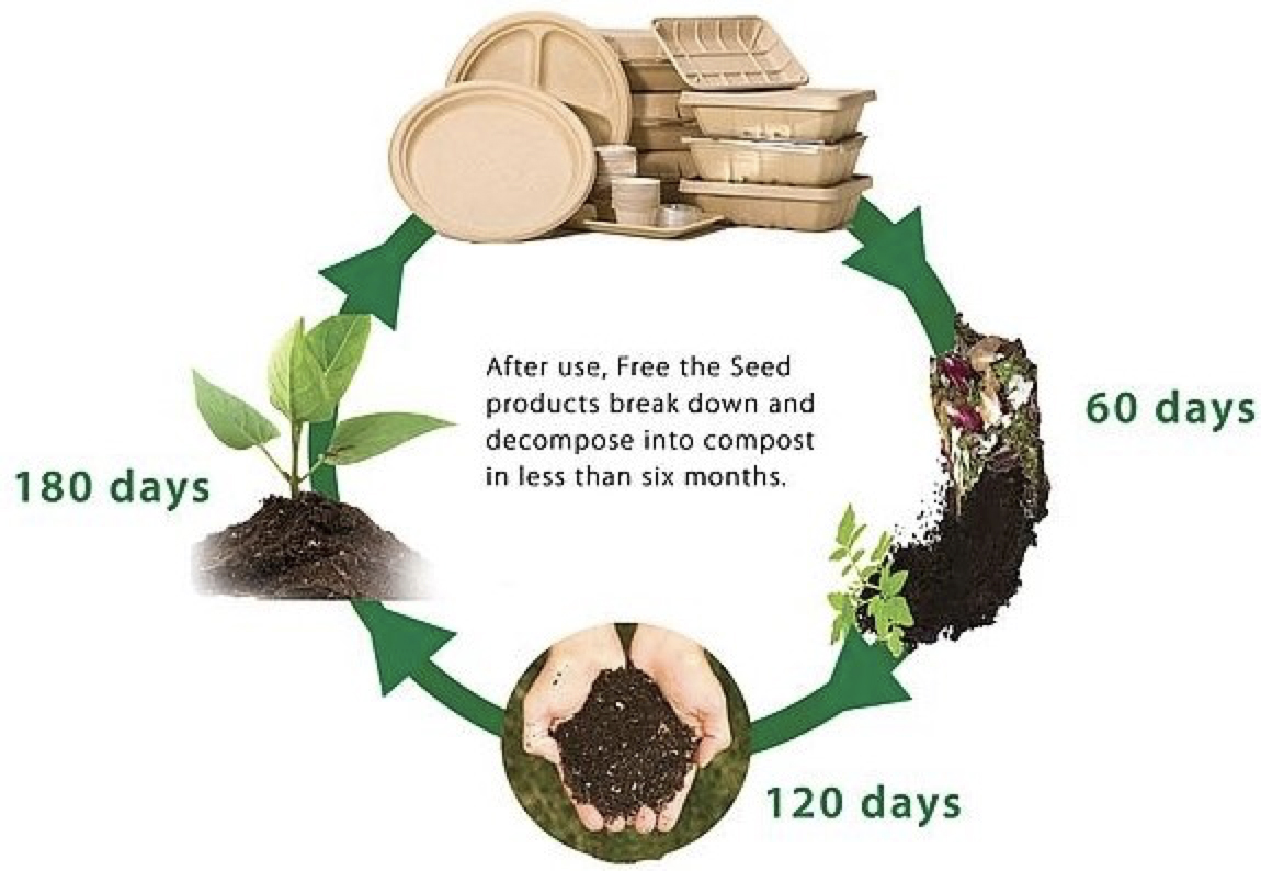 Free The Seed Decomposition Process